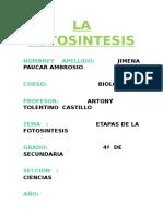 Etapas de La Fotosintesis Docx