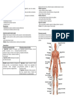 Anat. Resumo Para Prova Do Sistema Muscular