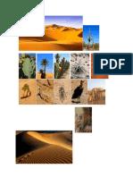Desierto y Biomas Acuaticos