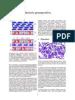 Bacteria Grampositiva