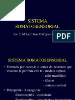 Sistema Somatosensorial