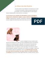 Cómo Educar a Las Crías de Perros