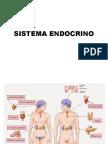 Sistema Endócrino.ppt