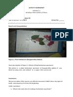 Activity Worksheetcompletev2