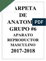 Carpeta Del Aparato Reproductor Masculino