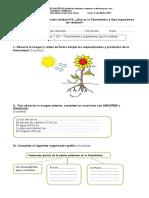 Evaluación 6 Año Fotosíntesis 2017