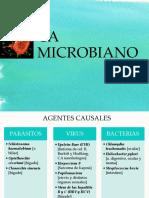 CA Microbiano