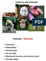 6 - Animals
