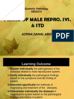 9) Male Reproductive System