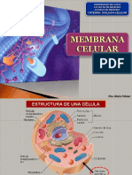 4- ESTRUCTURA MEMBRANA CELULAR - B2b2015.pptx