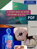 5- COMUNICACION INTERCCELULAR  - B2b2014.pptx