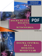 10- DOGMA BIOLOGIA CELULAR Y MITOCONDRIA -RESPIRACION CELULAR - B2b2014.pptx
