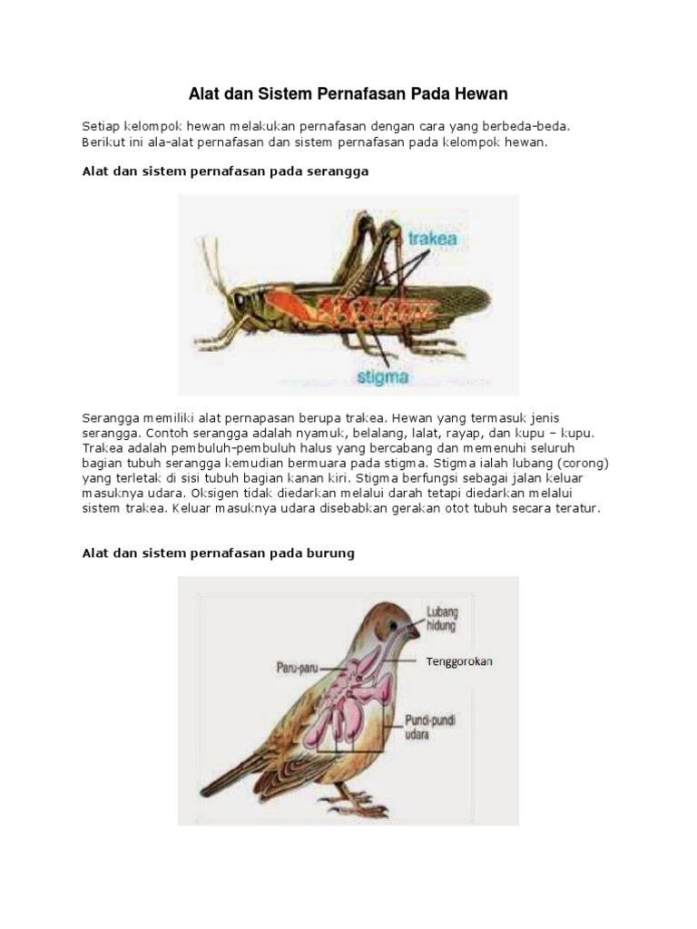 65 Gambar Organ Pernapasan Pada Hewan Amfibi Gratis Terbaik