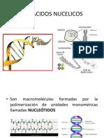 Los Acidos Nucelicos Clase 2