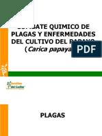 130042591 Combate Quimico de Plagas y Enfermedades en Papaya