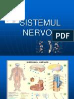 Sistemul nervos la om