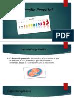 2.1 Desarrollo Prenatal
