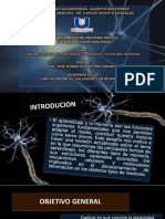Plasticidad Neuronal Cjj