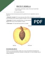 Fruto y Semilla.docx2