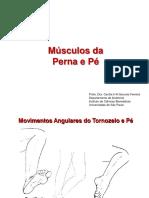 Músculos Da Perna e Pé. Profa. Dra. Cecília H a Gouveia Ferreira Departamento de Anatomia Instituto de Ciências Biomédicas Universidade de São Paulo
