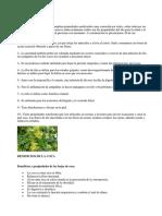 BENEFICIOS DEL TILO.docx
