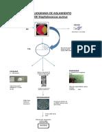 Flujograma de Microbiologia