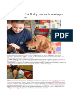 pets blog 2012