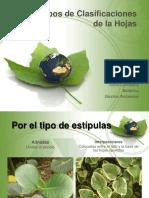 tiposdeclasificacionesdelahojas-120808225024-phpapp01