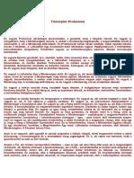 Trimorphic Protennoia.docx