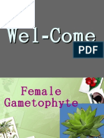 Female Gametophyte
