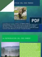 EL OSO PARDO POWER POINT.pptx