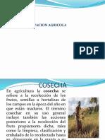 Cosecha de Grano,Forraje, Tuberculo -Janeth h.