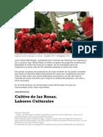 Rosas Caja