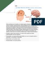 Sistema Nervioso Central y Perisferico