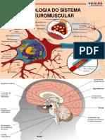 Neuromuscular Esqueleto