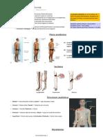 Apuntes - Anatomía I (1)