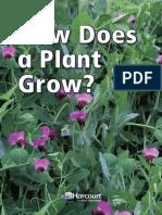How Does a Plant Grow