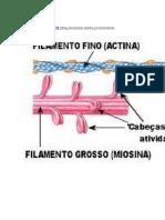 Miosina1