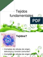 Clase 6 Tejidos Fundamentales
