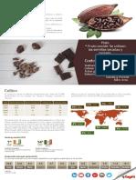 Infografía del Cacao