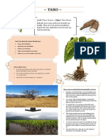taro infographic pdf