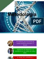 Métodología