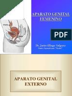 Org. Gentitales