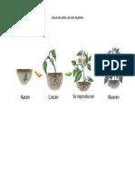 Ciclo de Vida de Un Planta
