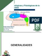 CLASE 3 PSICOMOTRICIDAD Bases Neurologicas y Fisiologicas de La Psicomotricidad.