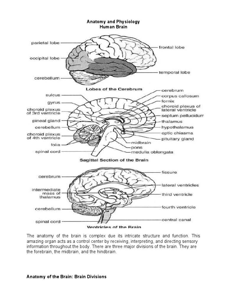 Anatomy and Physiology CVA | Spinal Cord | Vein