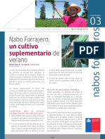 207 Nabo Forrajero