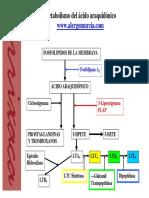 Metabolismo Ac Araquidonico
