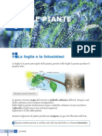 Lezione_facilitata_Le_piante.pdf