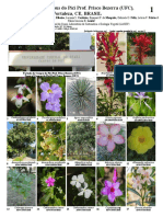 Plantas Do Campus Do Pici Prof. Prisco Bezerra